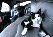 One-year-old cat hitches a ride in limo hire to travel in style